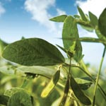 Ethanol, 15% more corn yield per acre, enzyme technology, biodiesel production